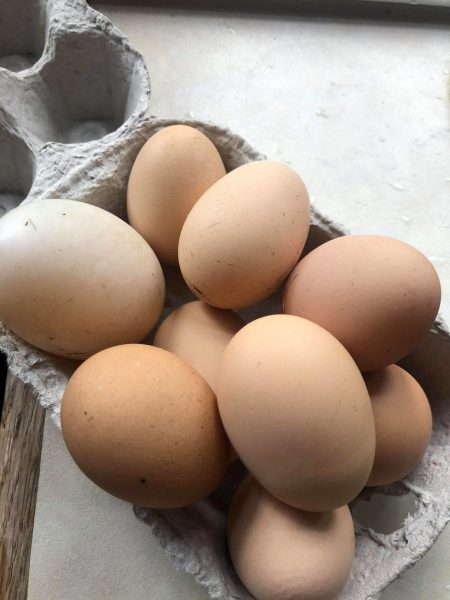 poultry_eggs-scaled